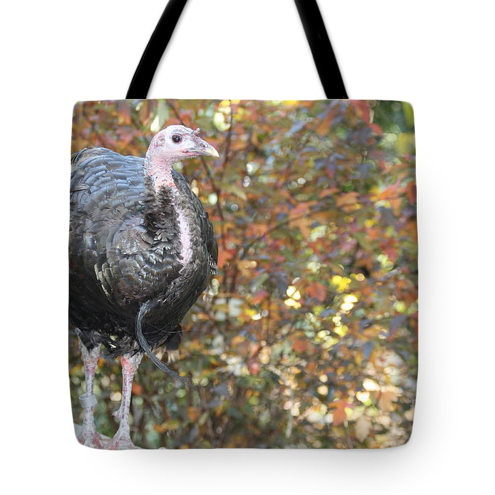 Wild Turkey Tote Bag featuring the photograph Wild Turkey by John Telfer