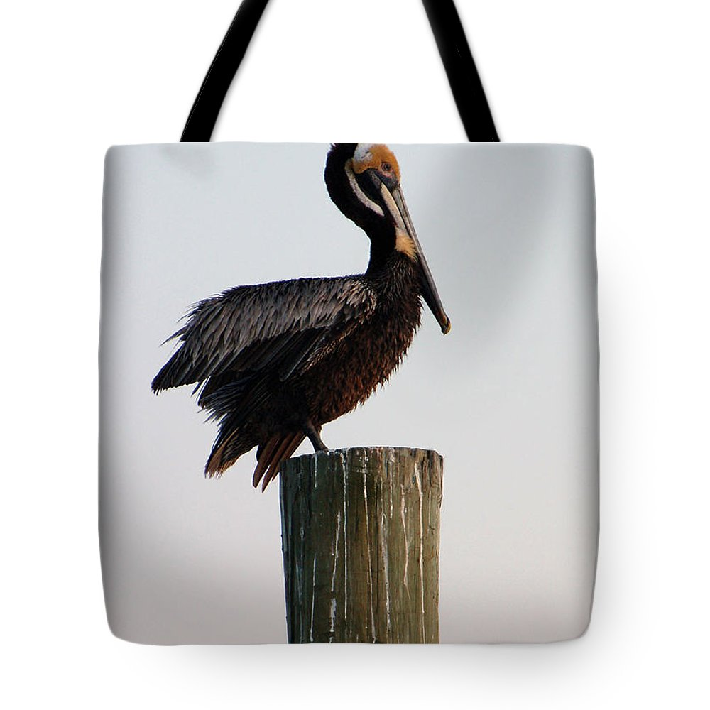 Brown Pelican Tote Bag featuring the photograph Will This Pose Do by Suzanne Gaff