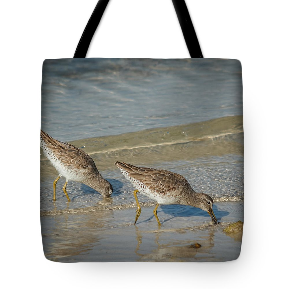 Florida Tote Bag featuring the photograph Willets by Jane Luxton
