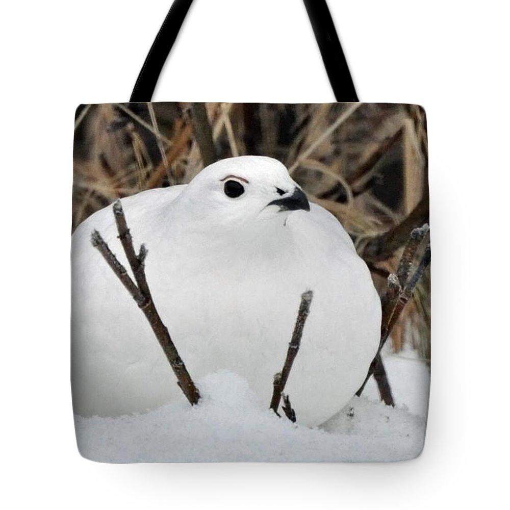 Ptarmigan Tote Bag featuring the photograph Willow Ptarmigan by Clint Pickarsky