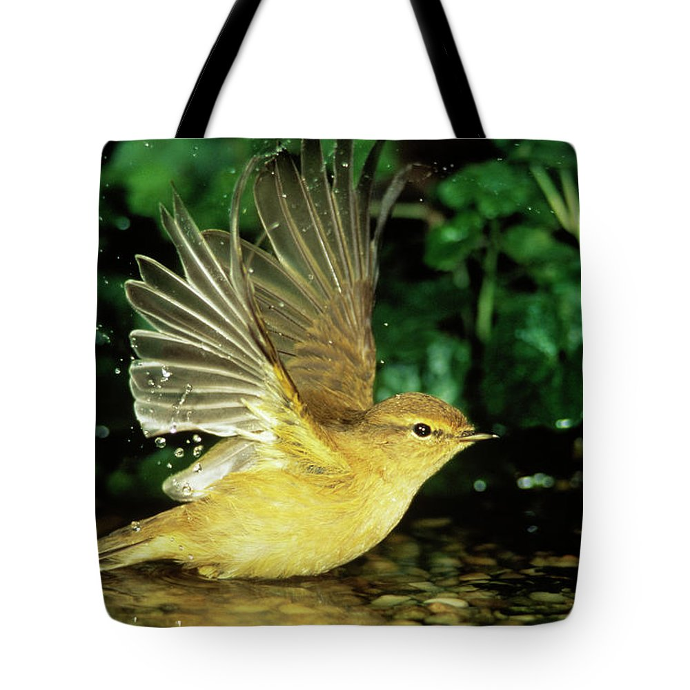 Fn Tote Bag featuring the photograph Willow Warbler Phylloscopus Trochilus by Duncan Usher