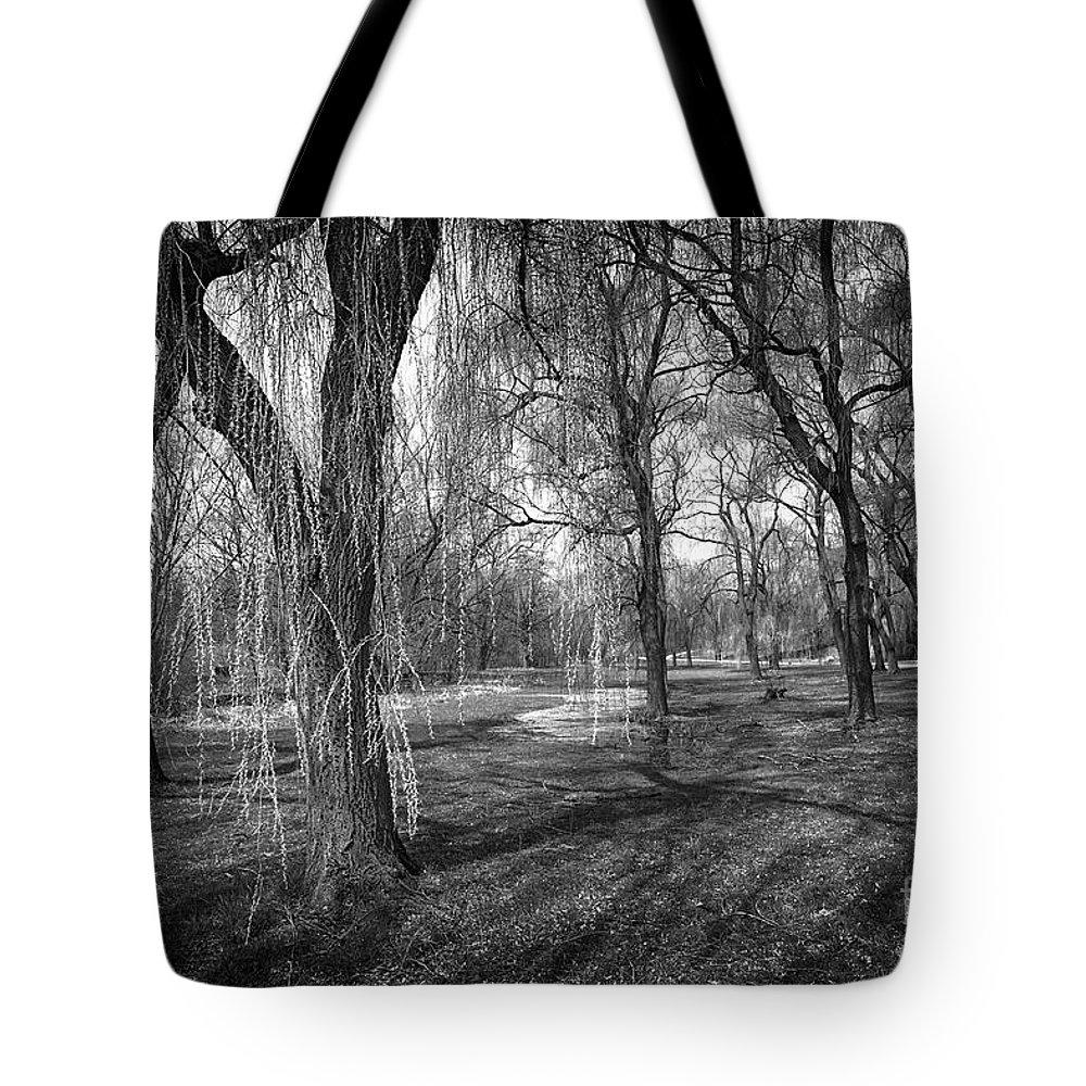 Willow Tote Bag featuring the photograph Willows In Spring Park by Elena Elisseeva
