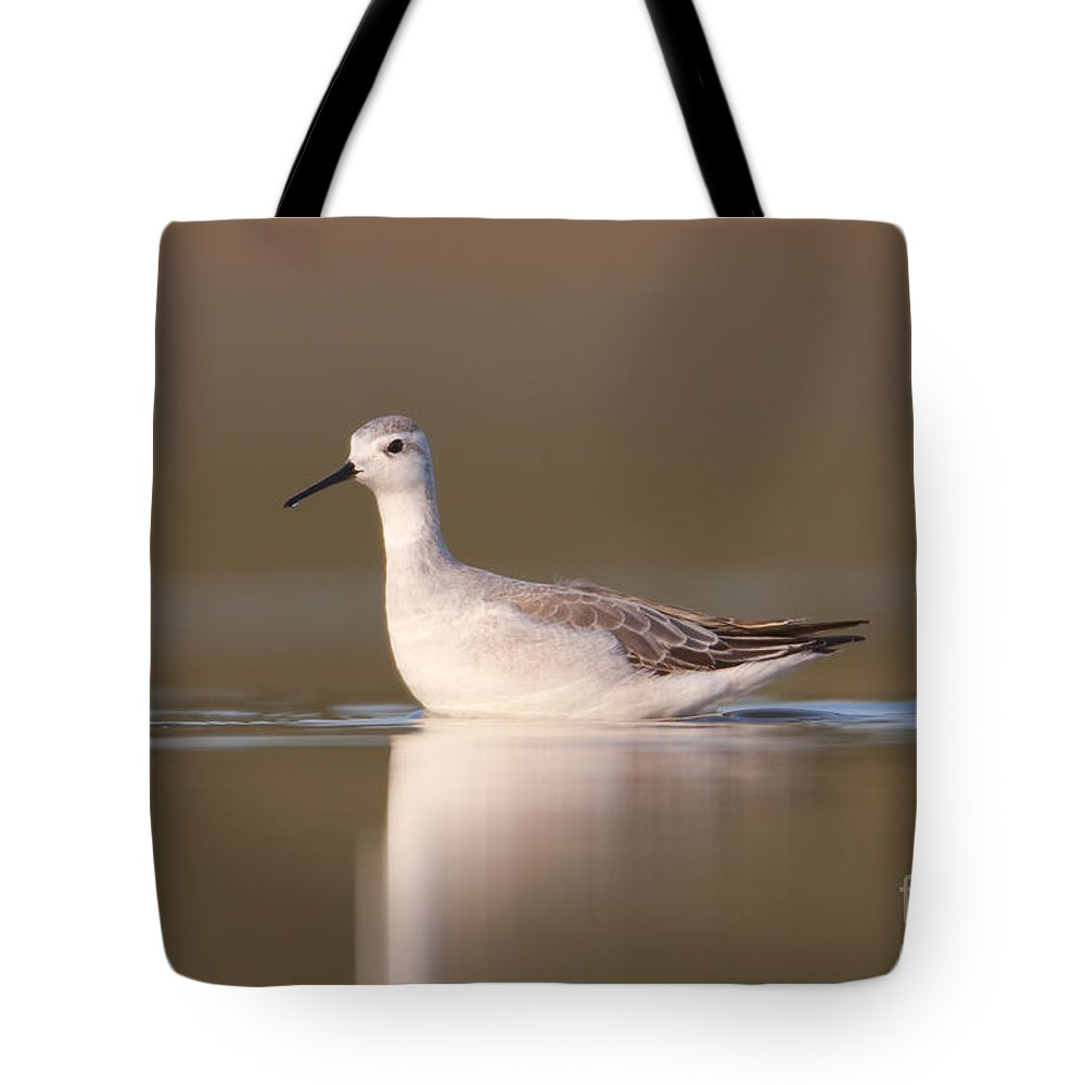 Clarence Holmes Tote Bag featuring the photograph Wilsons Phalarope I by Clarence Holmes
