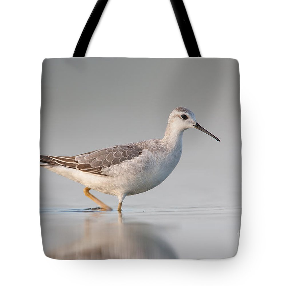 Clarence Holmes Tote Bag featuring the photograph Wilsons Phalarope II by Clarence Holmes