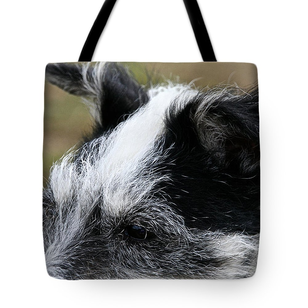 Animal Tote Bag featuring the photograph Windswept And Wise by Susan Herber