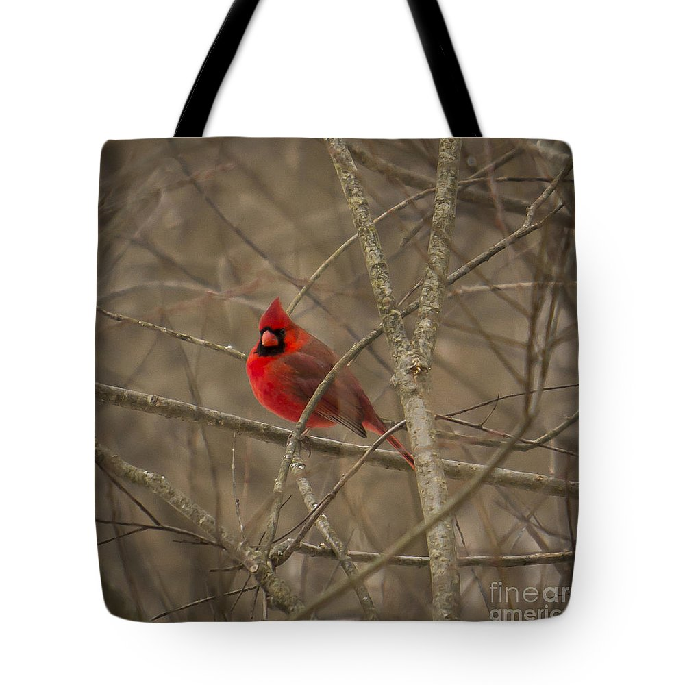 Bird Tote Bag featuring the photograph Winter Cardinal by Brad Marzolf Photography