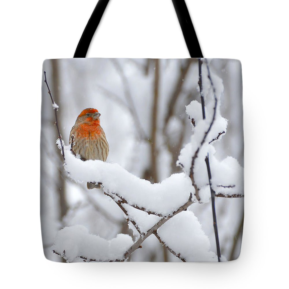 Snow Tote Bag featuring the photograph Winter Color by Randy Giesbrecht