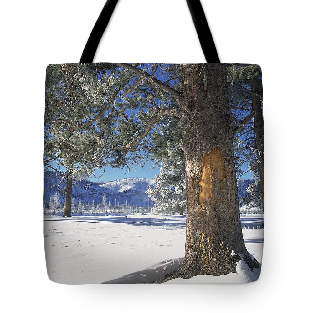 Close Up Tote Bag featuring the photograph Winter In Yellowstone National Park by Tim Fitzharris