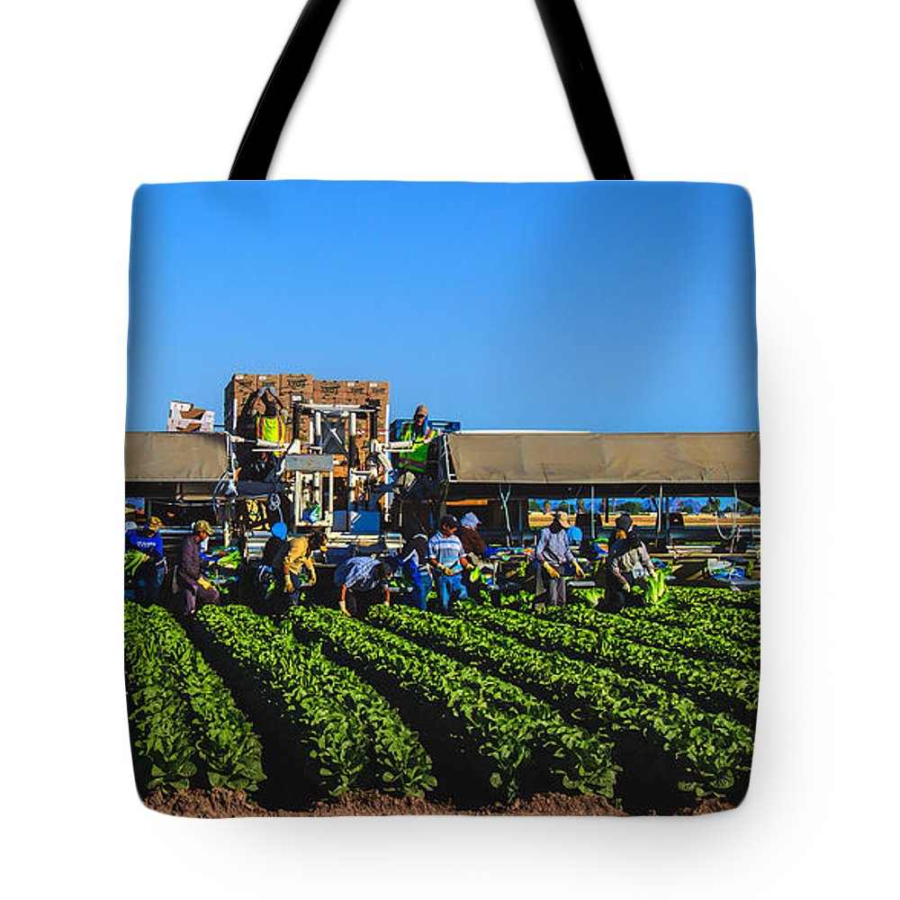 Winter Lettuce Tote Bag featuring the photograph Winter Lettuce Harvest by Robert Bales