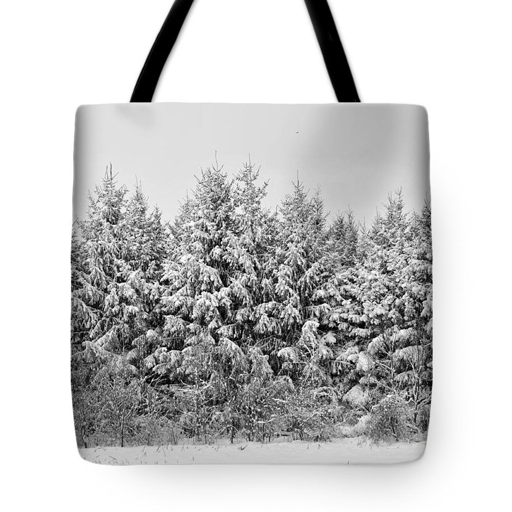 Pine Tote Bag featuring the photograph Winter Pine by Elaine Mikkelstrup