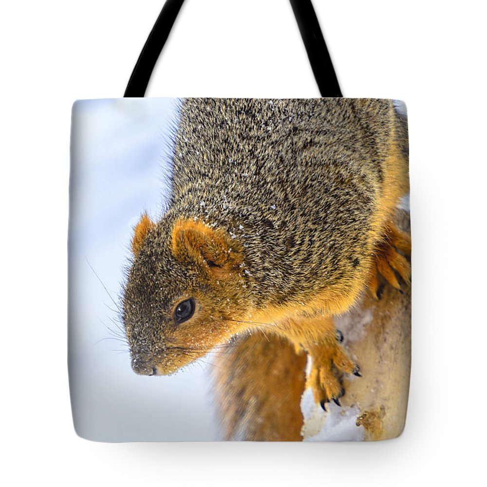 Animals Tote Bag featuring the photograph Winter Squirrel by LeeAnn McLaneGoetz McLaneGoetzStudioLLCcom