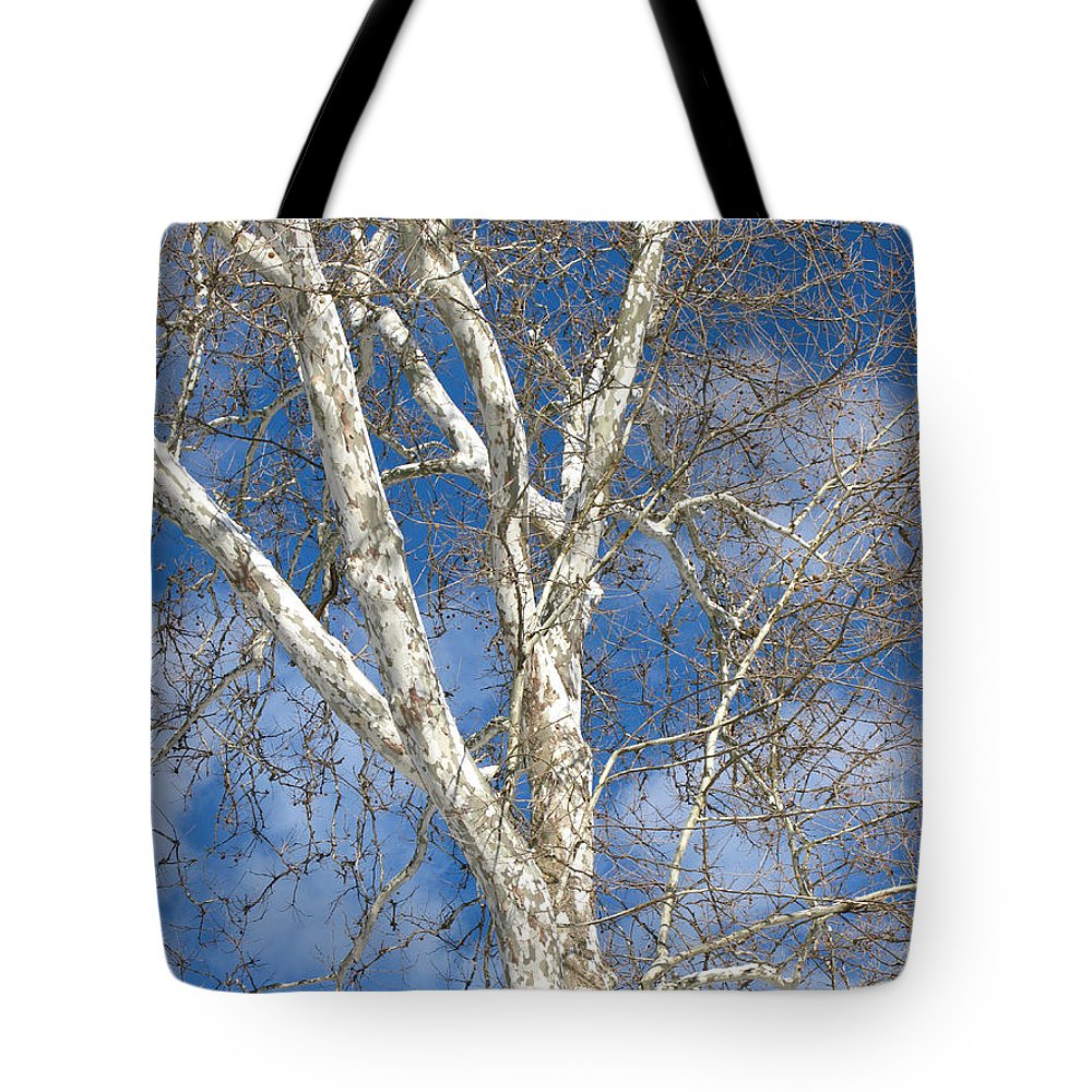 Winter Tote Bag featuring the photograph Winter Sycamore by Ann Horn