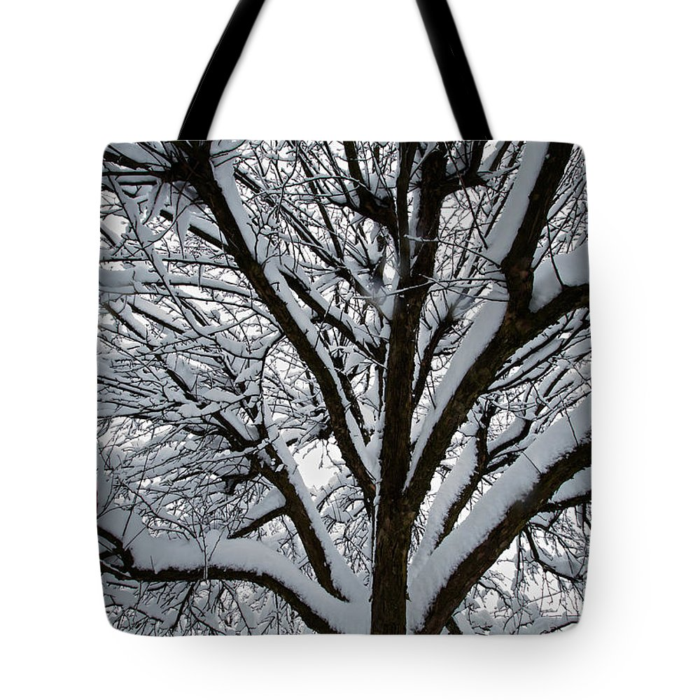 Snow Tote Bag featuring the photograph Winter Tree 1 by William Norton