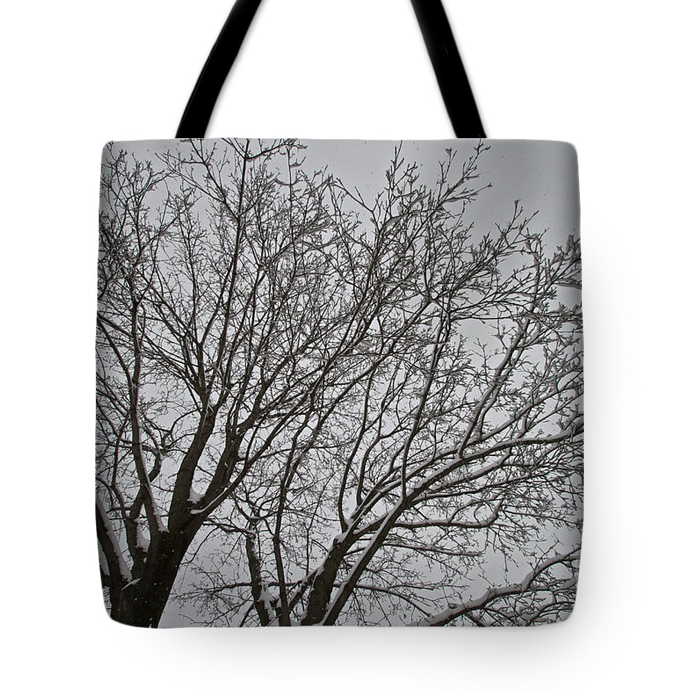 Snow Tote Bag featuring the photograph Winter Tree 6 by William Norton