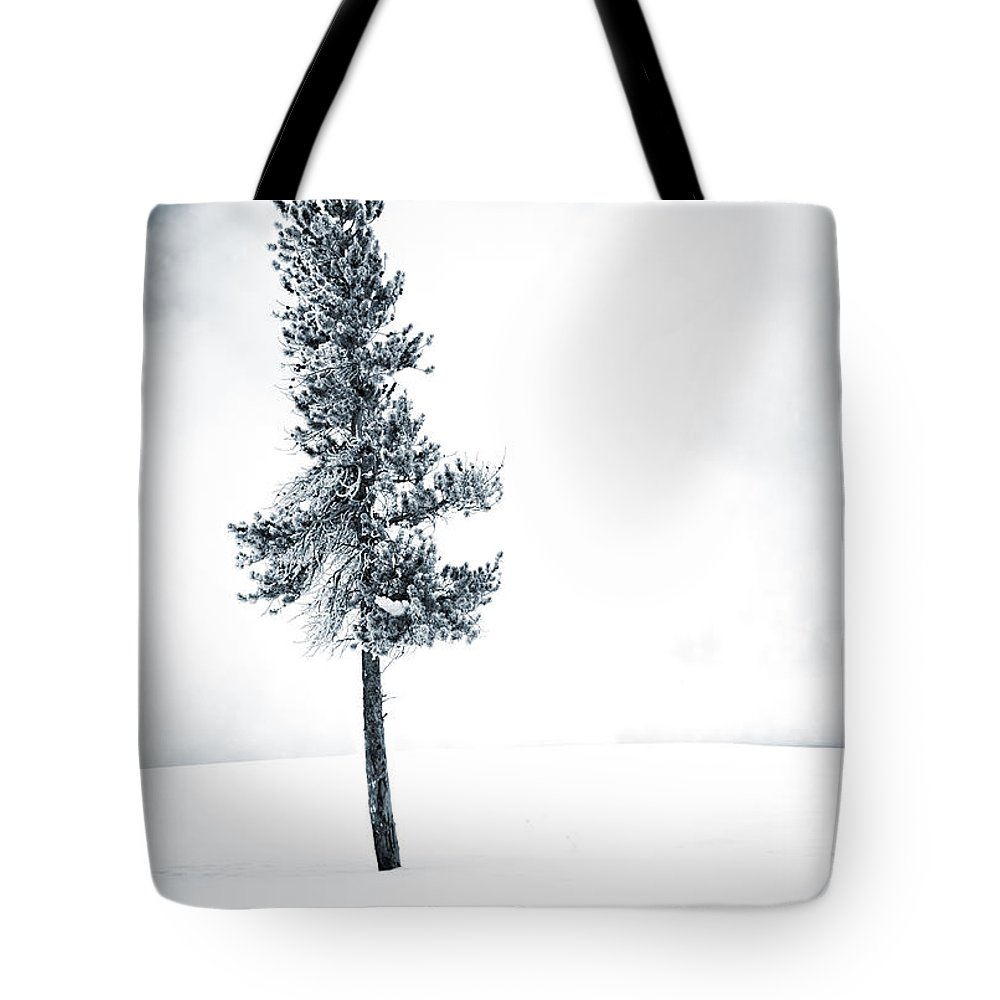 Winter Tote Bag featuring the photograph Winter Tree by David Lichtneker