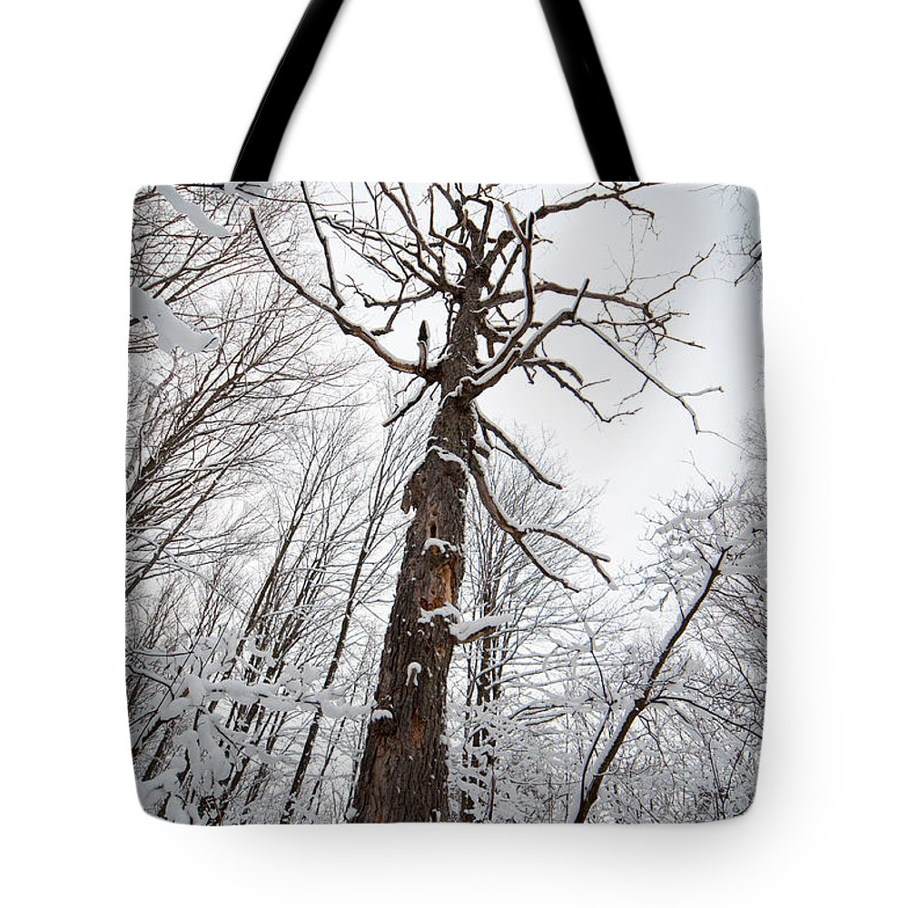 Landscape Tote Bag featuring the photograph Winter Tree Perspective by Richard Kitchen