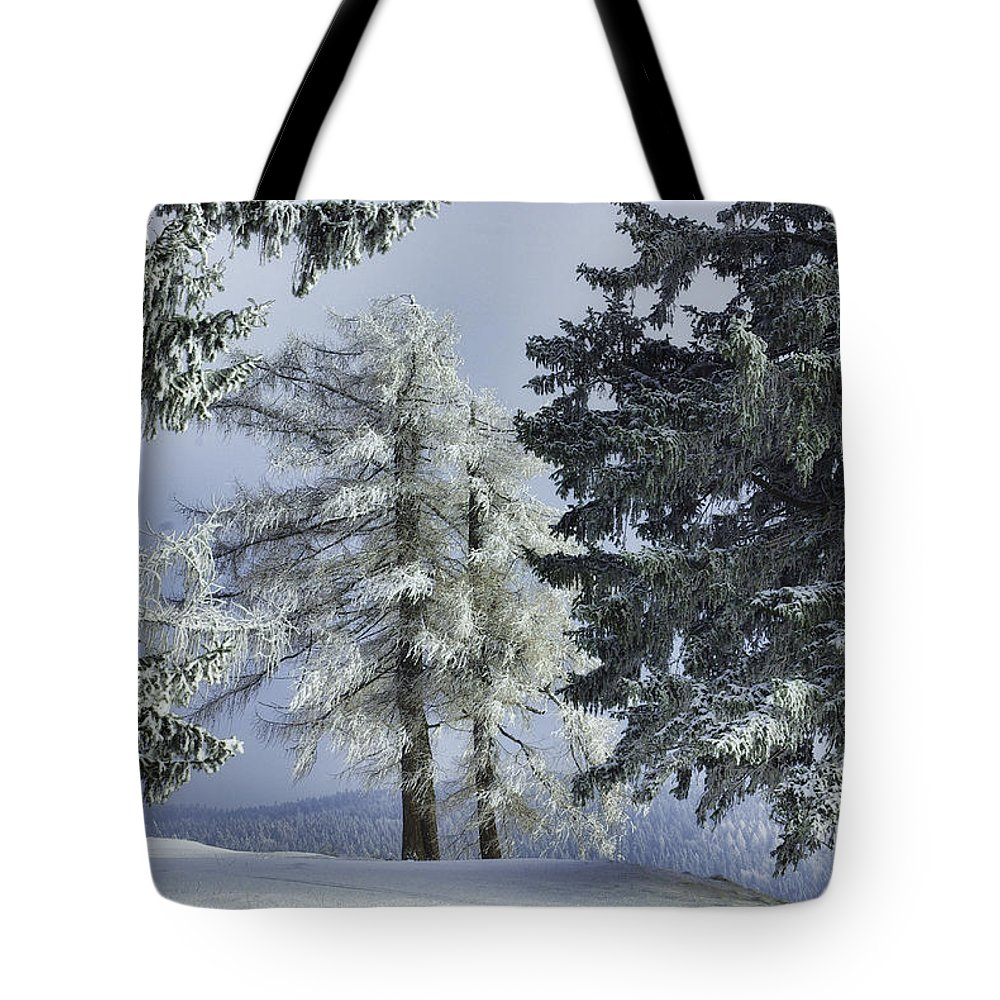Austria Tote Bag featuring the photograph Winter Trees by Christine Czernin-Morzin