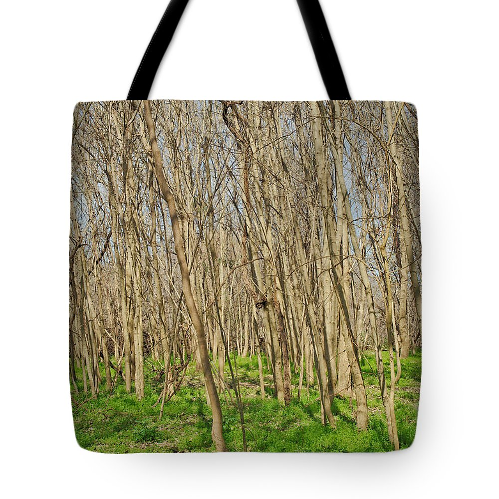 Woods Tote Bag featuring the photograph Winter Woods by Gary Richards