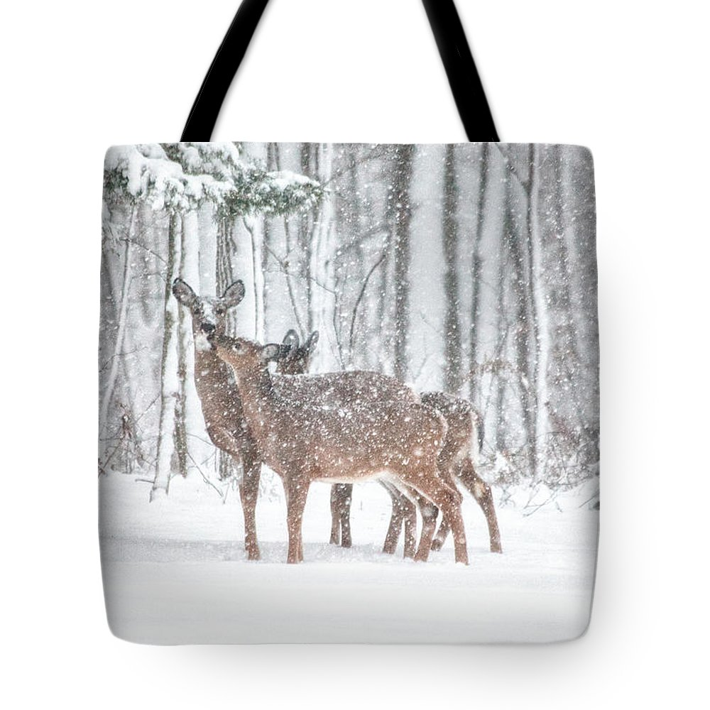Deer Tote Bag featuring the photograph Winters Love by Karol Livote