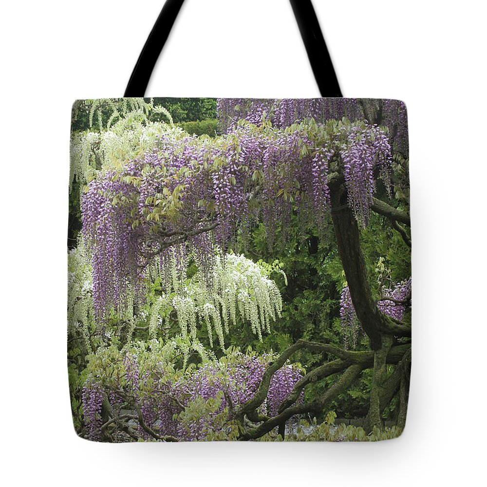 Wisteria Tote Bag featuring the photograph Wisteria by CJ McKendry