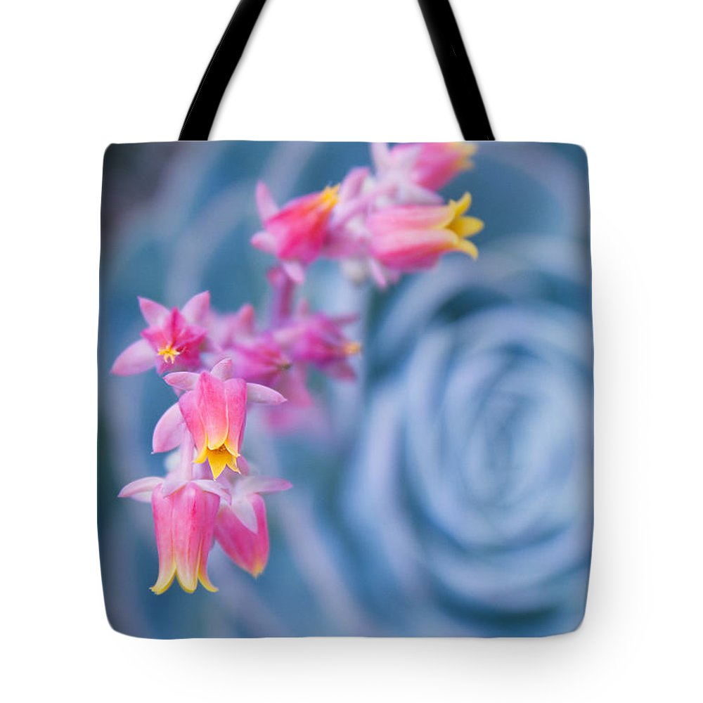 Aloha Tote Bag featuring the photograph with affection - Echeveria glauca by Sharon Mau
