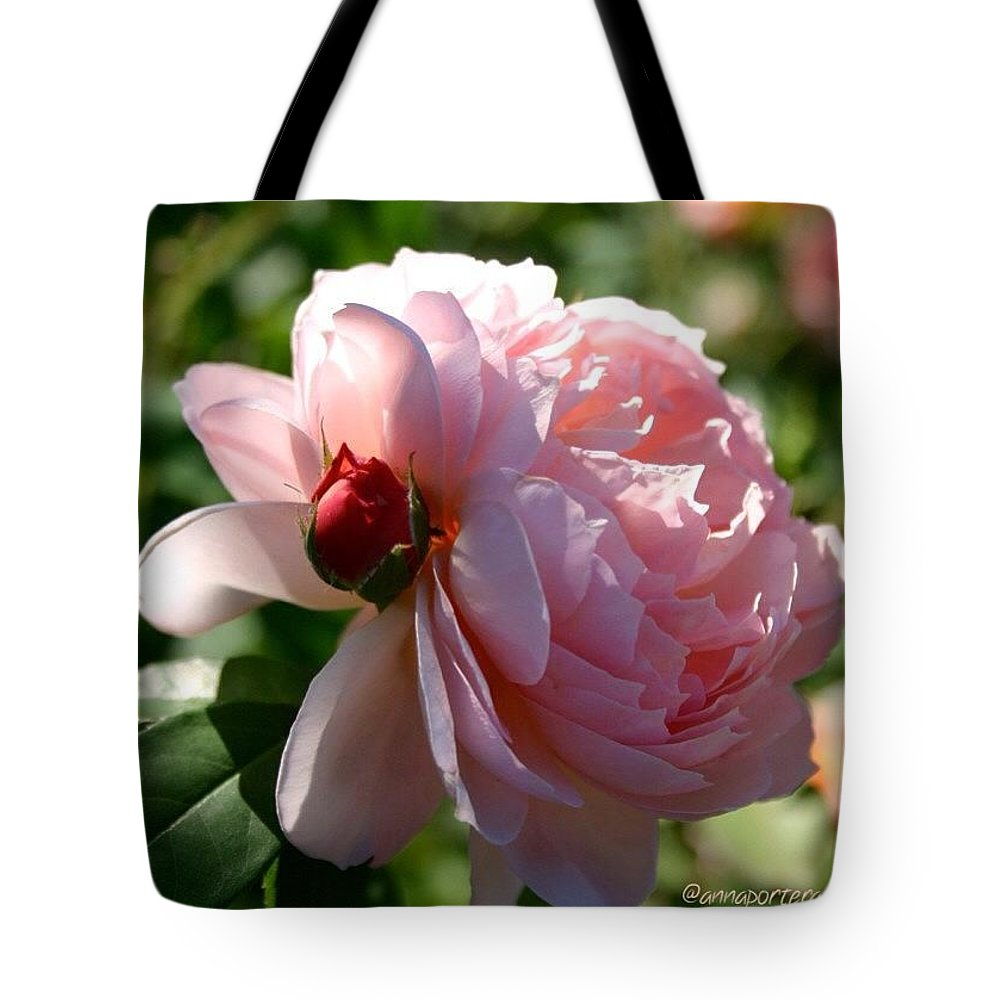 With Child Blush Pink Rose Tote Bag featuring the photograph With Child Blush Pink Rose by Anna Porter
