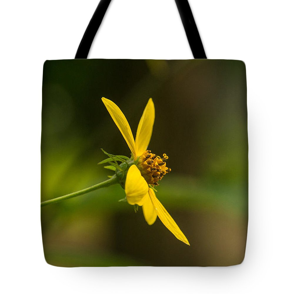 Daisy Tote Bag featuring the photograph Wodland Flower With Curlicue On Top by Douglas Barnett