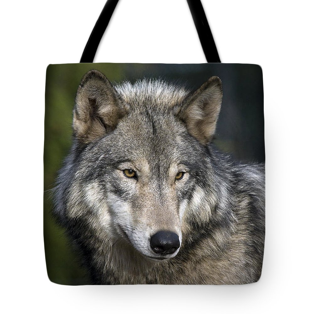Wolf Tote Bag featuring the photograph Wolf by Wes and Dotty Weber