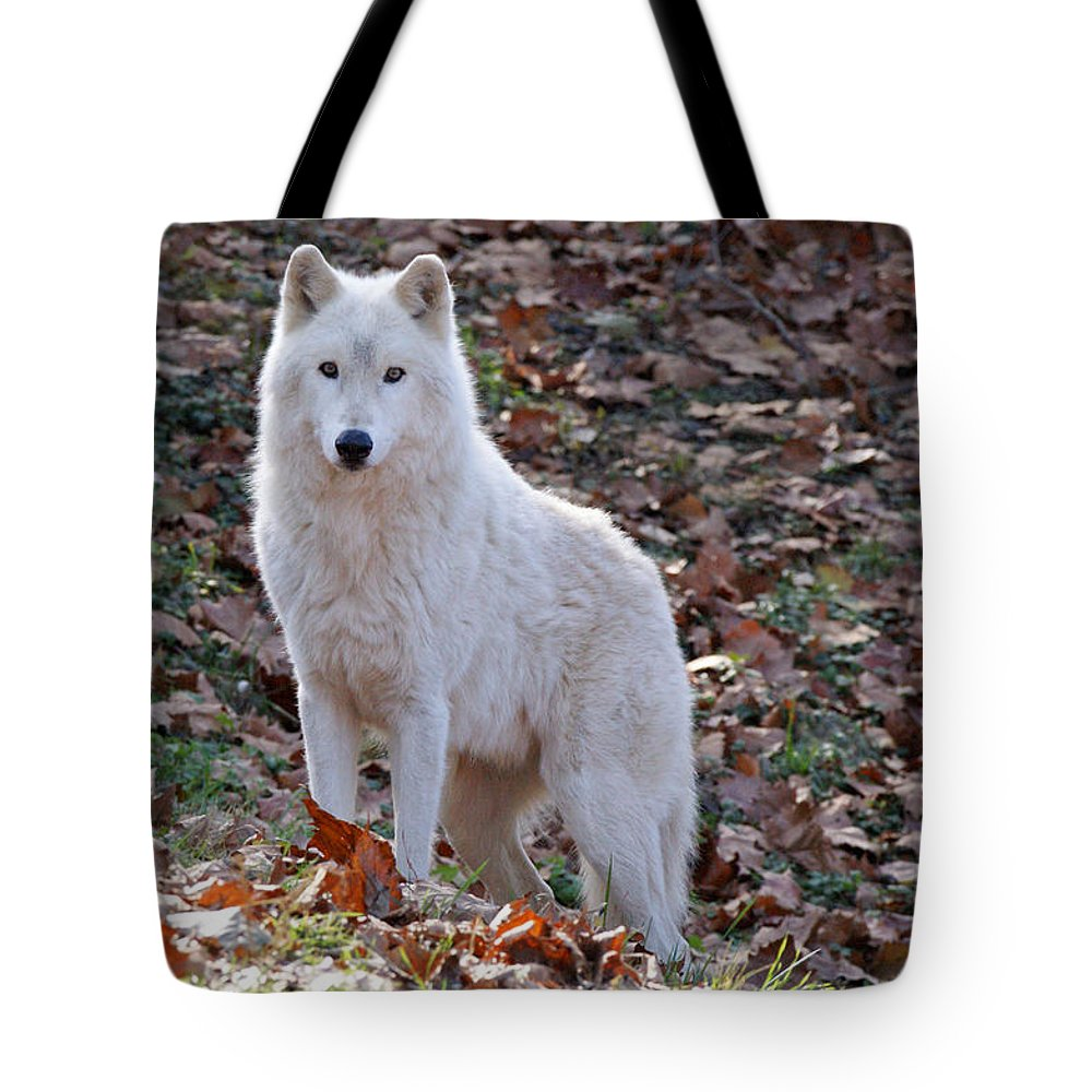 Wolf Tote Bag featuring the photograph Wolf In Autumn by Sandy Keeton