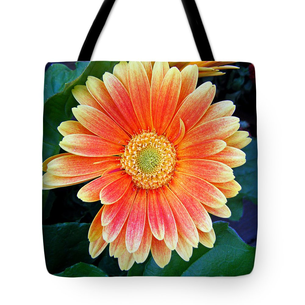Duane Mccullough Tote Bag featuring the photograph Wonderful Daisy by Duane McCullough