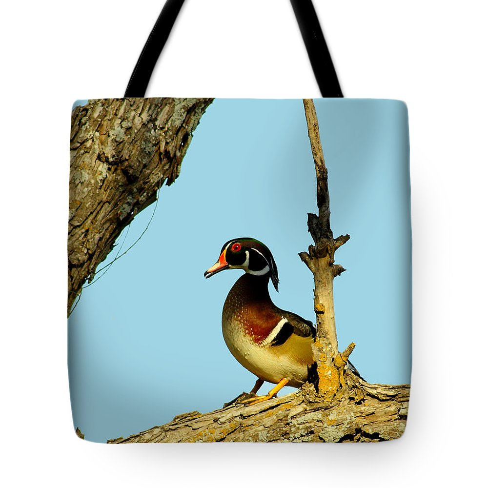 Animal Tote Bag featuring the photograph Wood Duck Drake In Tree by Robert Frederick