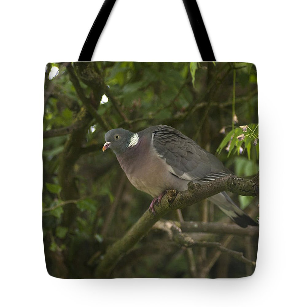 Pigeon Tote Bag featuring the photograph Wood Pigeon by Richard Thomas