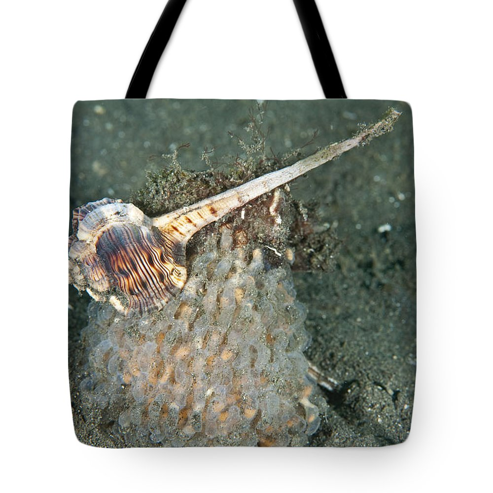 Woodcock Murex Tote Bag featuring the photograph Woodcock Murex Depositing Eggs by Andrew J. Martinez