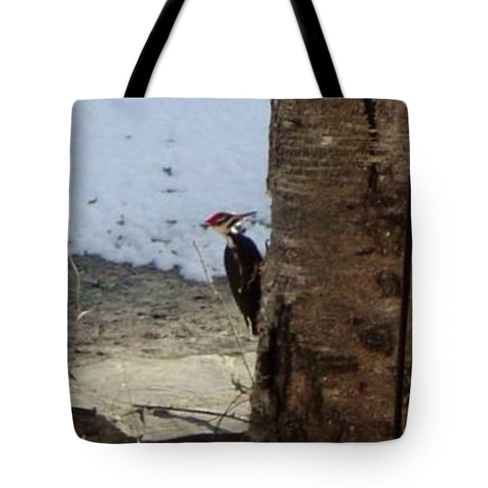 Tote Bag featuring the photograph Woody And The Old Birch by Brian S Boucher