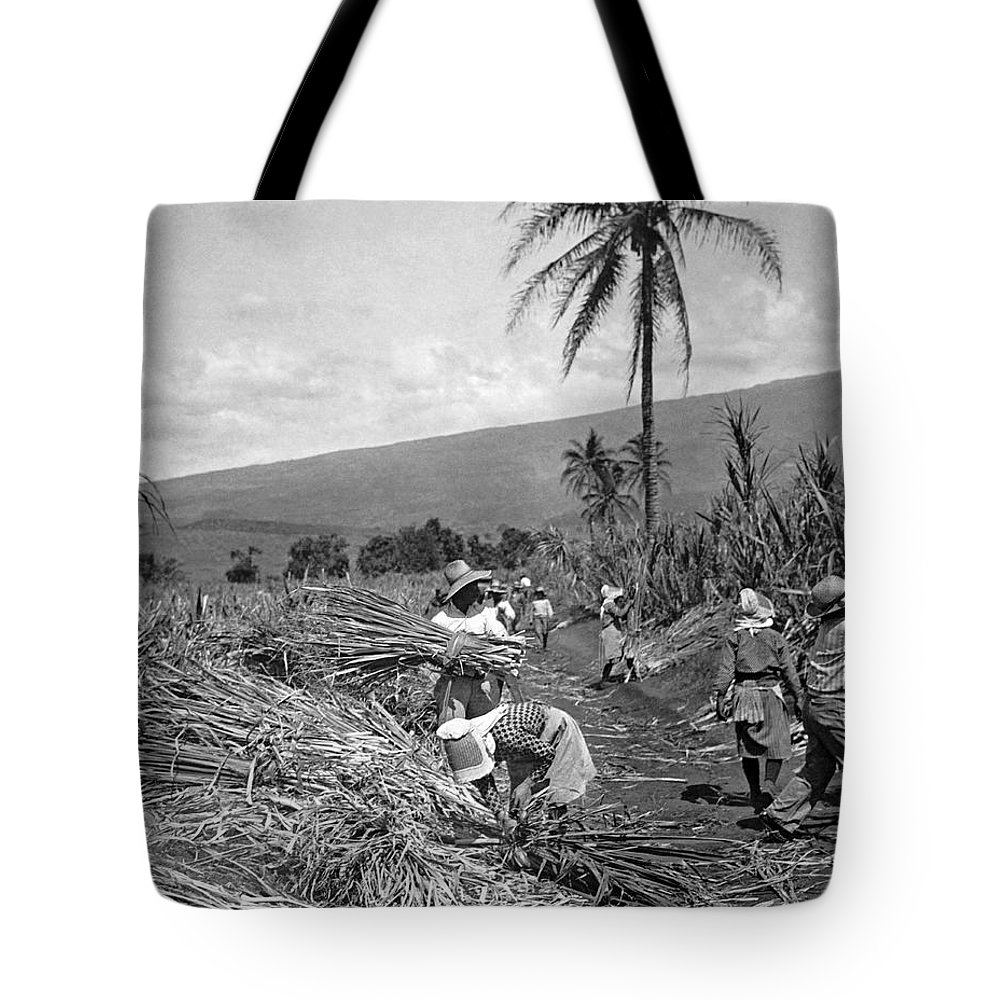1930s Tote Bag featuring the photograph Workers Harvesting Sugar Cane by Underwood Archives