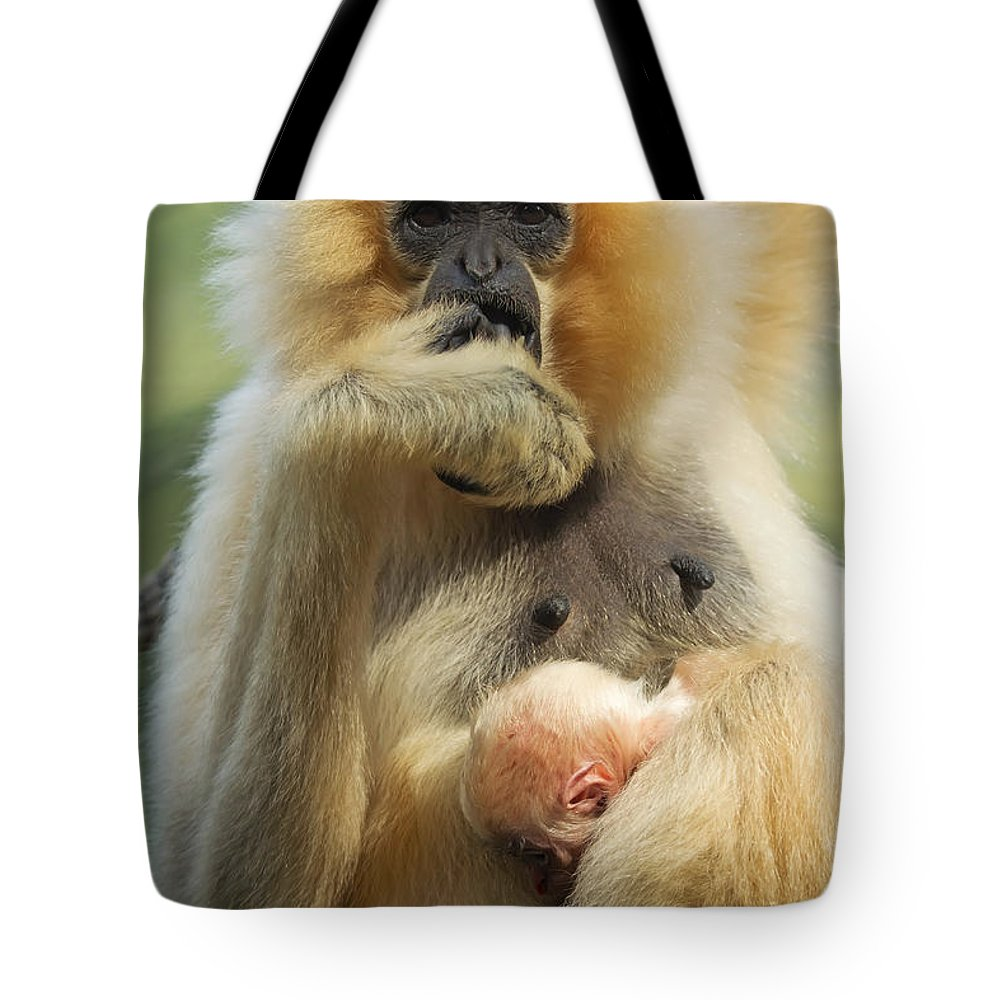 Motherhood Tote Bag featuring the photograph Wow. I Have A Baby by Jaroslav Frank