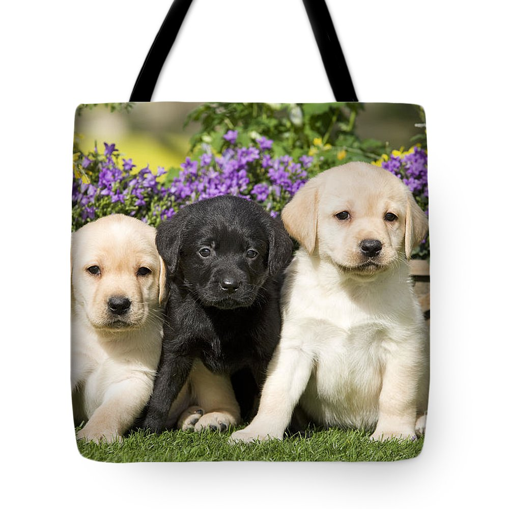 Labrador Retriever Tote Bag featuring the photograph Yellow And Black Labrador Puppies by Jean-Michel Labat