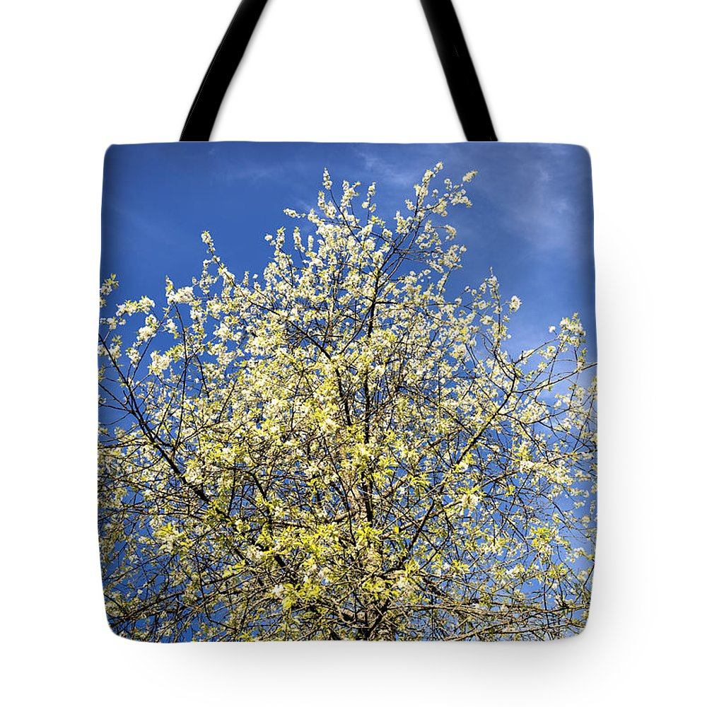 Blossoming Tote Bag featuring the photograph Yellow And Blue - Blooming Tree In Spring by Matthias Hauser