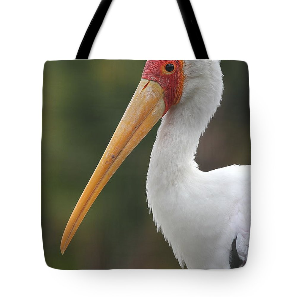 Stork Tote Bag featuring the photograph Yellow-billed Stork by Ken Keener