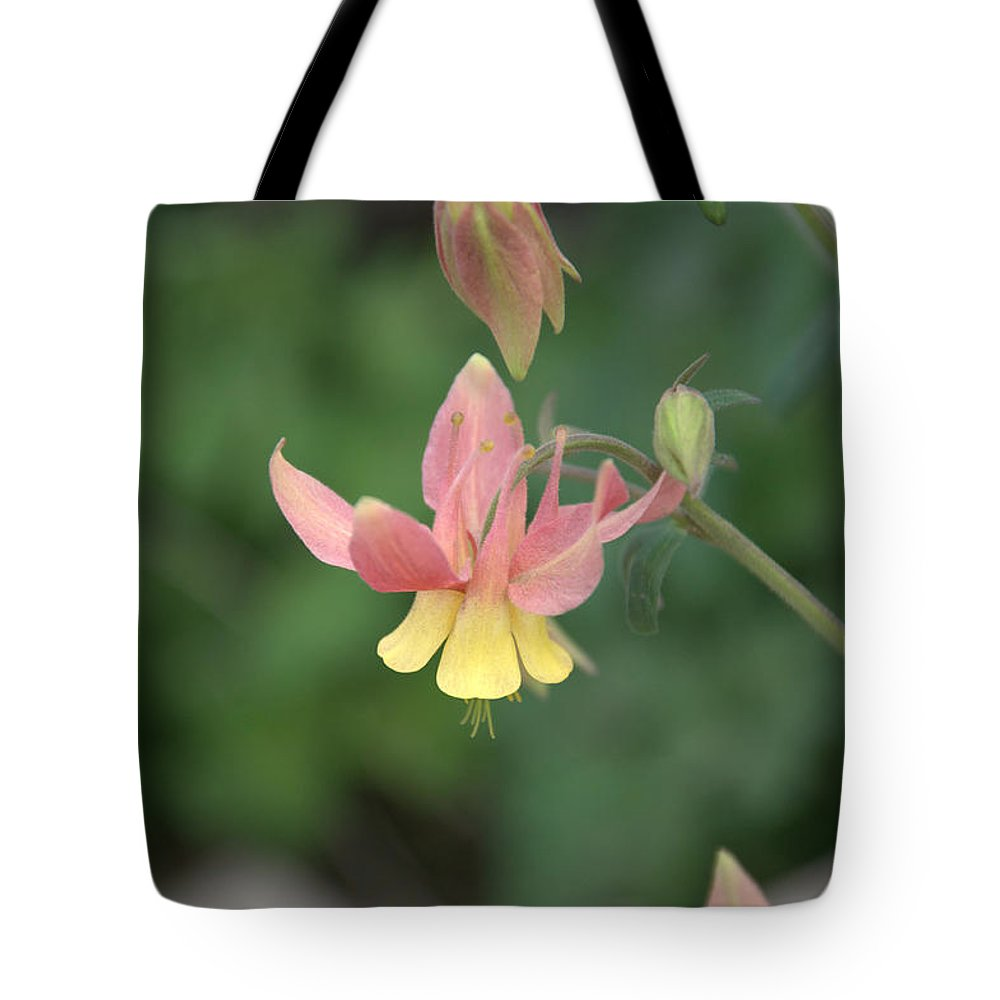 Flower Tote Bag featuring the photograph Yellow Columbine by Frank Madia