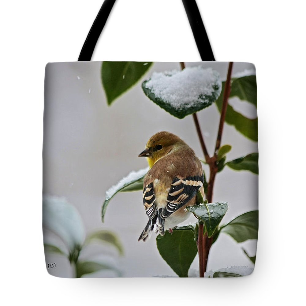 Goldfinch Tote Bag featuring the photograph Goldfinch On Branch by Denise Romano