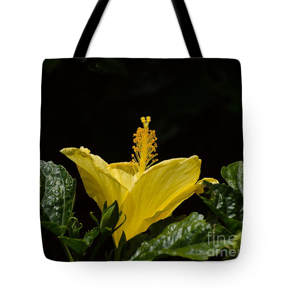Flower Tote Bag featuring the photograph Yellow Hibiscus by Donna Brown