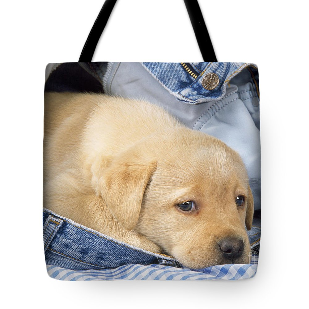 Yellow Labrador Tote Bag featuring the photograph Yellow Labrador Puppy In Jeans by John Daniels