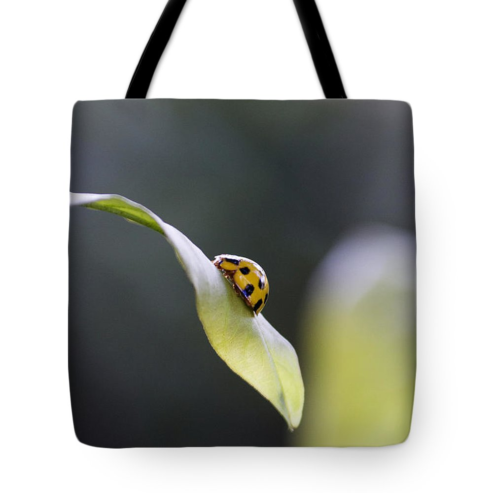 Science Tote Bag featuring the photograph Yellow Ladybug At Dawn by Nola Lee Kelsey