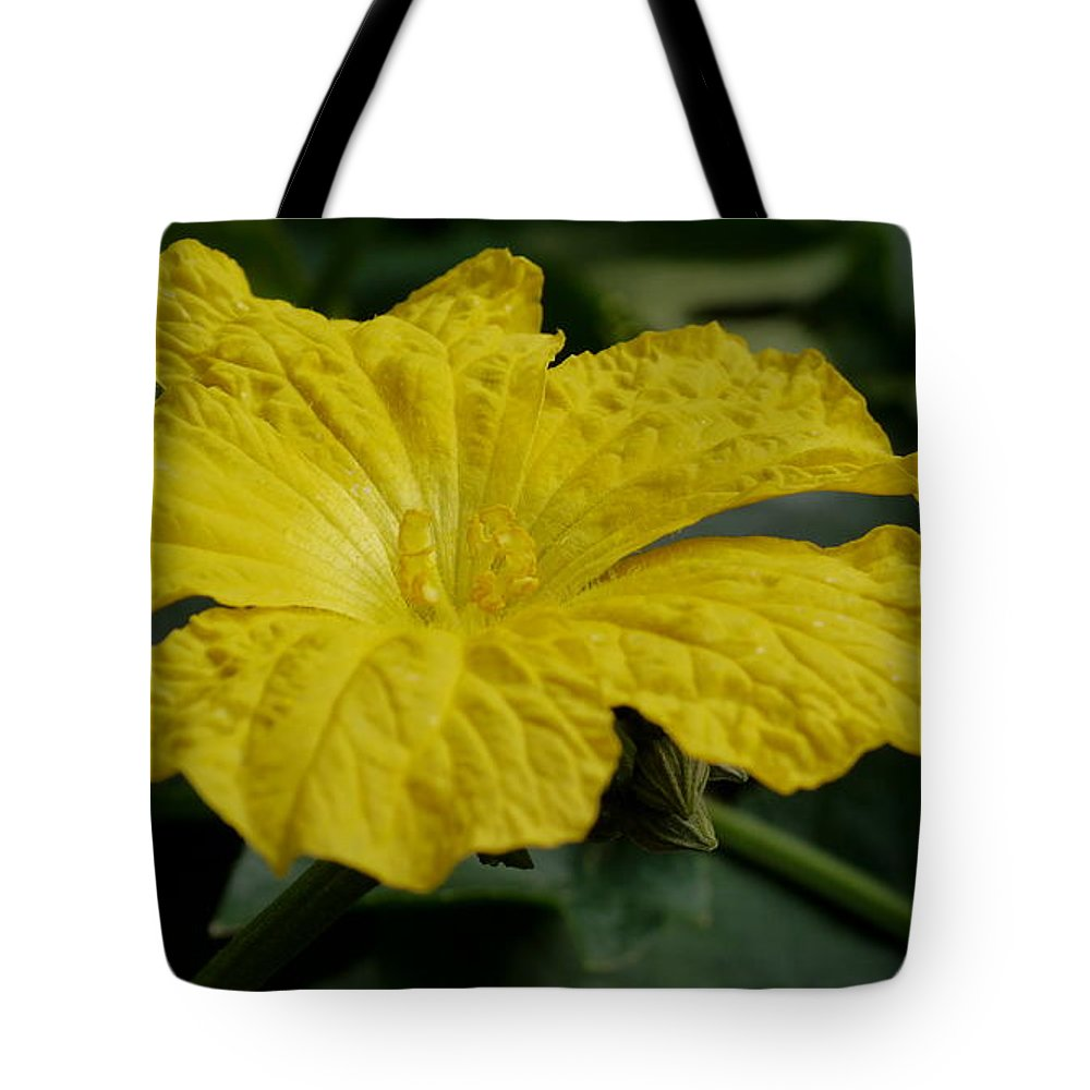 Luufa Blossoms Tote Bag featuring the photograph Yellow Luffa Blossom by Christiane Schulze Art And Photography