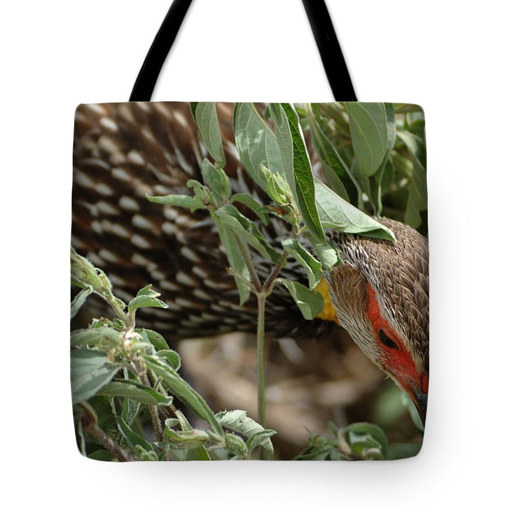 Yellow-necked Spurfowl Tote Bag featuring the photograph Yellow-necked Spurfowl by Ian Ashbaugh