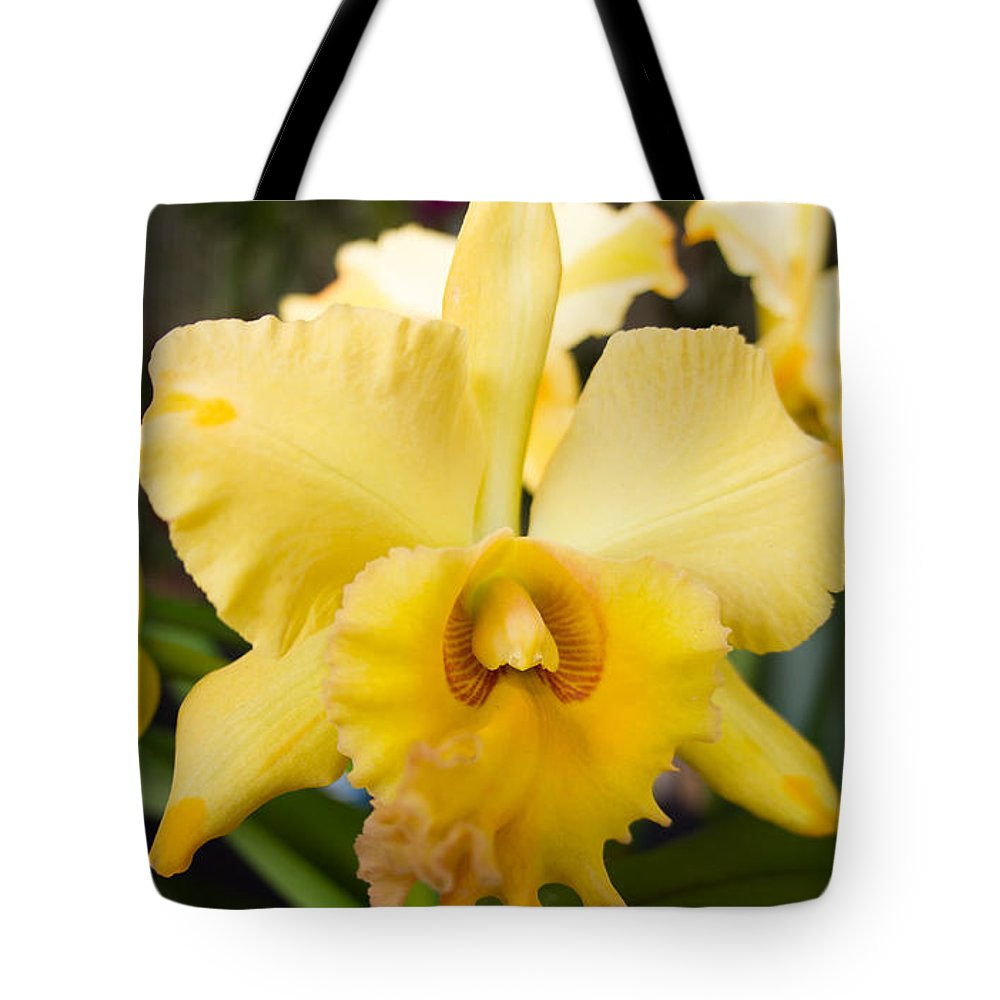 Yellow Tote Bag featuring the photograph Yellow Orchids by Eric Barnes