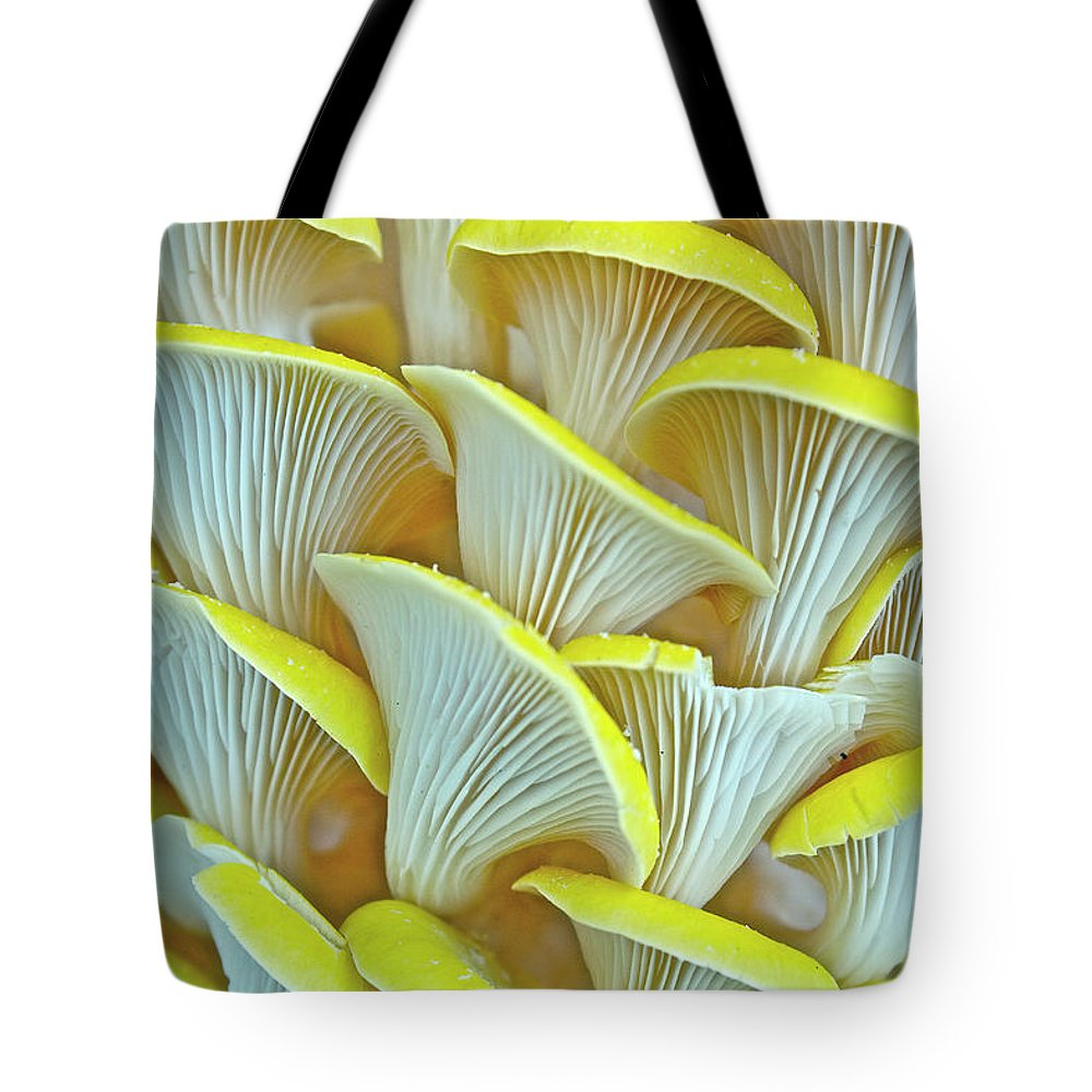 Edible Mushroom Tote Bag featuring the photograph Yellow Oyster Mushrooms by Keith Getter