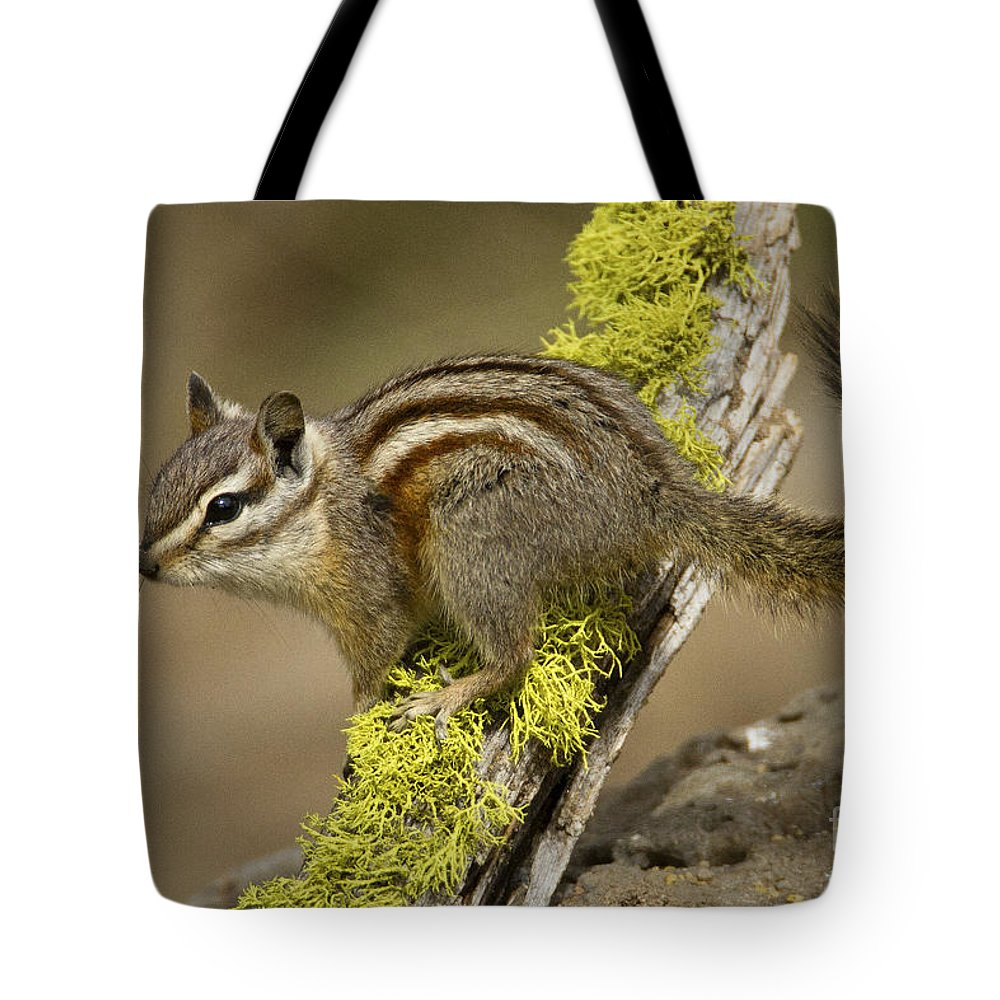 Yellow Pine Chipmunk Tote Bag featuring the photograph Yellow Pine Chipmunk by Sharon Ely