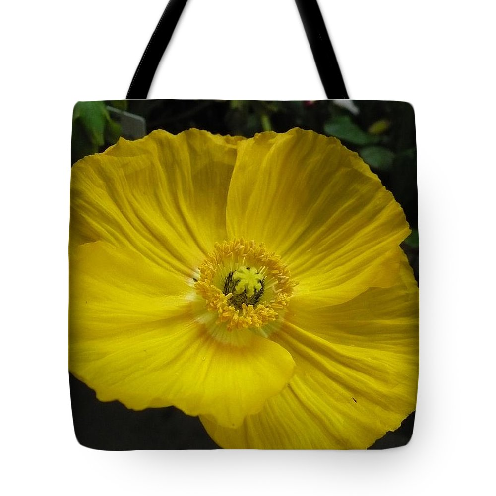 Yellow Tote Bag featuring the photograph Yellow Poppie by Nicki Bennett